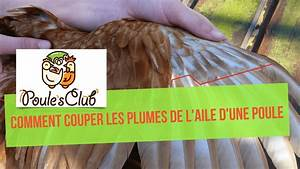 Comment Faire Une Soudure à L étain : comment couper les plumes de l 39 aile d 39 une poule youtube ~ Premium-room.com Idées de Décoration