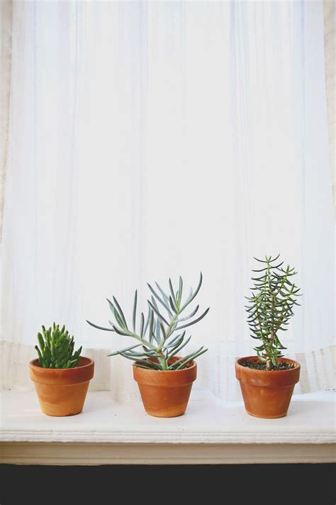 plants indoor potted succulents houseplants window interior windowsill popular succulent light plant care simple learning sturdy easy kitchen tips abeautifulmess