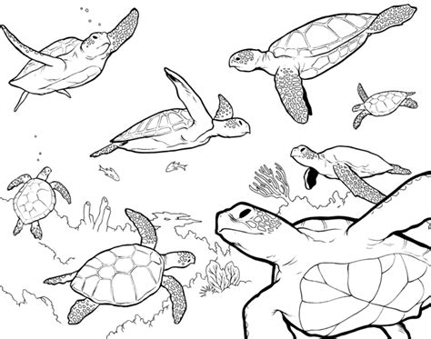sea turtle coloring pages coloring pages sea turtle printables az coloring pages