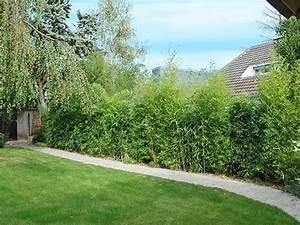 les 25 meilleures idees de la categorie haie de bambou sur With idee amenagement jardin paysager 1 haie de bambous une idee de plus en plus seduisante