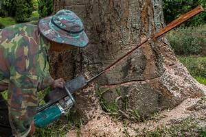 Abattage D Arbres Autorisation : prix d 39 abattage d 39 un arbre tout savoir ~ Premium-room.com Idées de Décoration