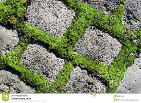 mattoni in cemento per giardino pianta verde fra il fondo dei mattoni cemento percorso