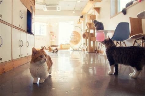 178 best Cat Cafe's Around The World images on Pinterest   Cat cafe, Crazy cat lady and Crazy cats