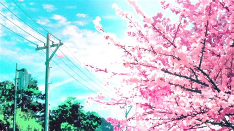 anime cherry blossom wallpapers top  anime cherry
