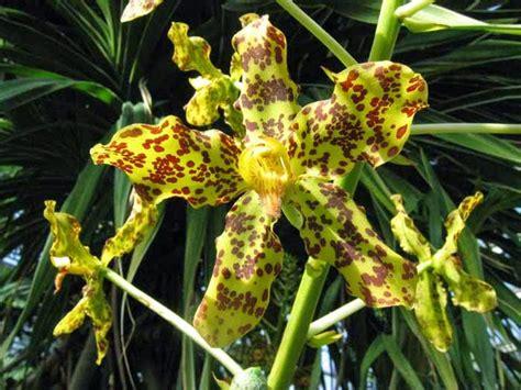 tumbuhan langka indonesia hari hari indah