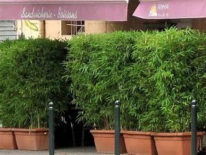 Kübel Bepflanzen Ideen : bambus im k bel kaufen sichtschutz ~ Buech-reservation.com Haus und Dekorationen