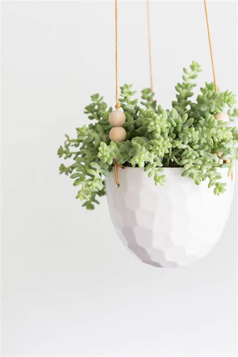 1000 ideas about hanging succulents on