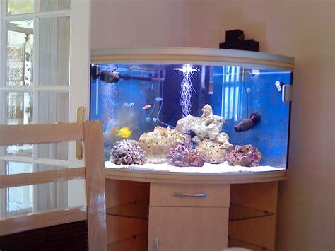corner fish tank with cabinet rena aqualife corner tank complete marine set up at