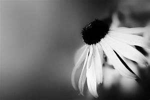 Schwarz Weiß Bilder : bilder wohnzimmer schwarz weiss inneneinrichtung und m bel ~ Bigdaddyawards.com Haus und Dekorationen