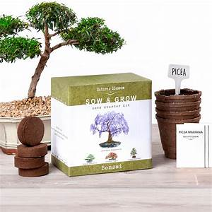 How Long Does It Take A Bonsai Tree To Grow From Seed