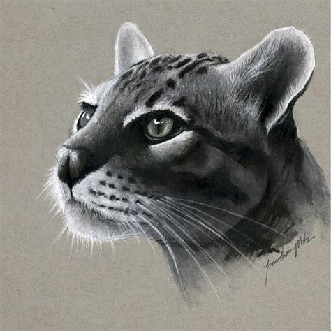 wild cats images  pinterest big cats wild