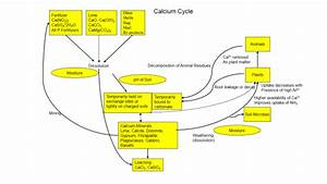Part 2  U2013 Soybean Calcium Requirements  Understanding The Calcium Cycle