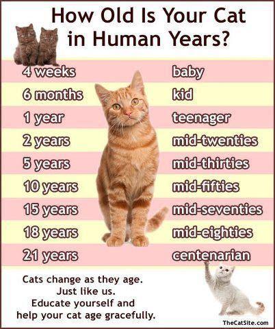 cat  growing oldercare  love cats cat