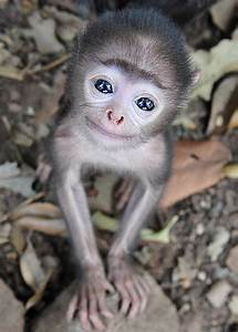 Is this the world's cutest baby monkey? Tiny grey langur ...