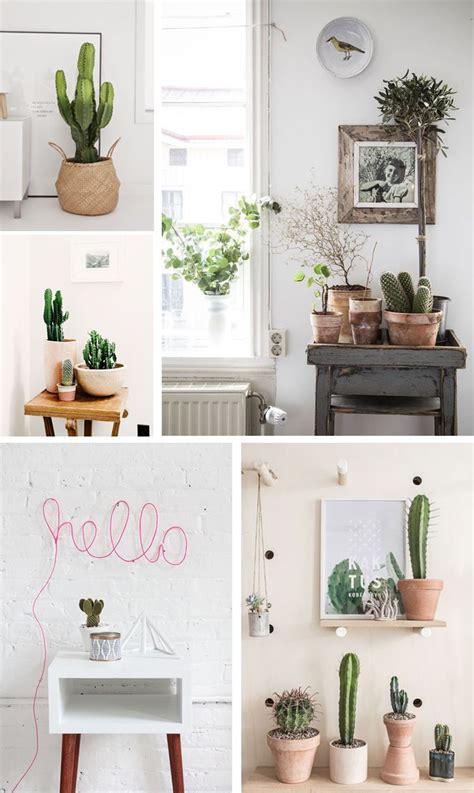 diselo  cactus plantas de interior plantas