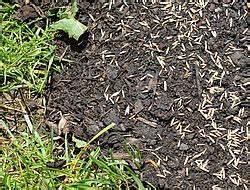 Trockene Stellen Im Rasen : neu ans en ~ Markanthonyermac.com Haus und Dekorationen