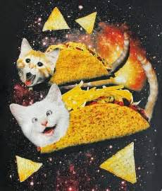taco cat catladyland cats are taco cats in space heck yes