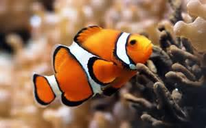 Résultat d'images pour poisson