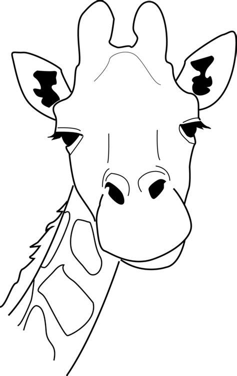 giraffe drawing cliparts   clip art