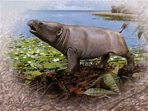 Google Images  Phosphatherium
