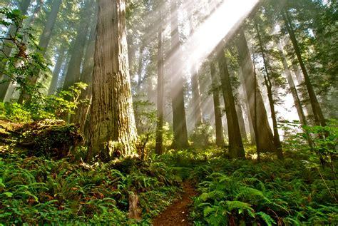 del norte coast redwoods sp image gallery
