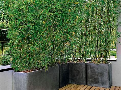 les 25 meilleures id 233 es de la cat 233 gorie bambou sur
