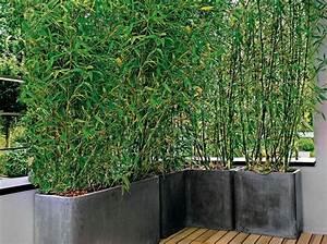 les 25 meilleures idees de la categorie bambou sur With jardin et piscine design 12 des idees de design pour un balcon de ville montreal