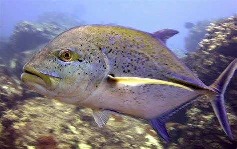 climate change  alter ocean food chains leading
