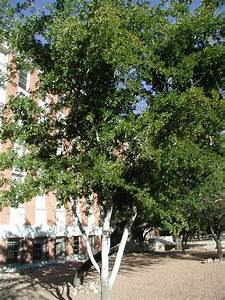 find, trees, , u0026, learn