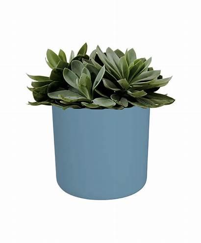Pot Plant Indoor Round Plants Nelson Sizes
