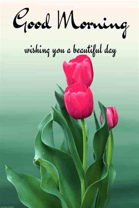 good morning hd images wishes pictures