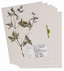 Was Ist Ein Herbarium : was bl ht denn da das herbarium buch versandkostenfrei bei ~ A.2002-acura-tl-radio.info Haus und Dekorationen