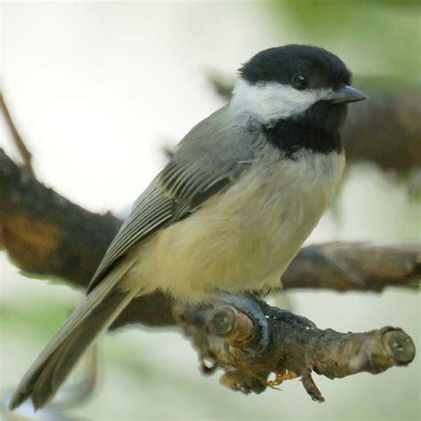 bird of nj