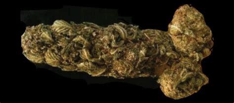 Le Cannabis Cause l'Impuissance / Dysfonction Érectile ...