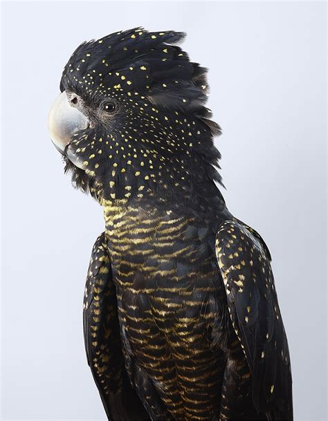 photographer captures  beauty  colorful birds