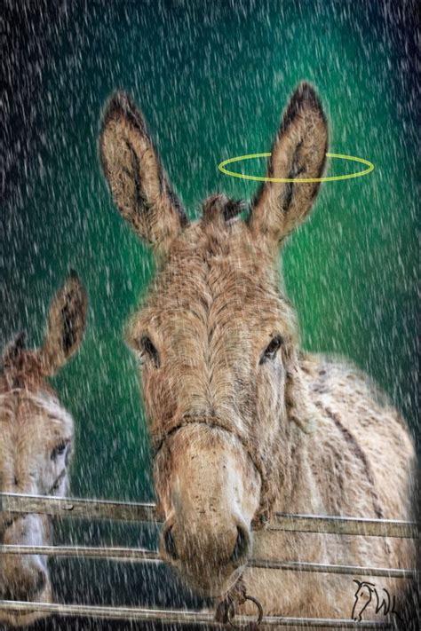 images  burro art  pinterest original