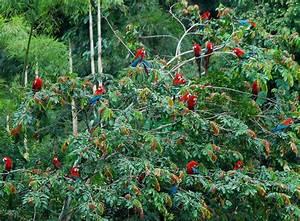 Amazon Rainforest Quotes. QuotesGram