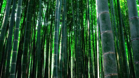 bamboo forest background pixelstalknet