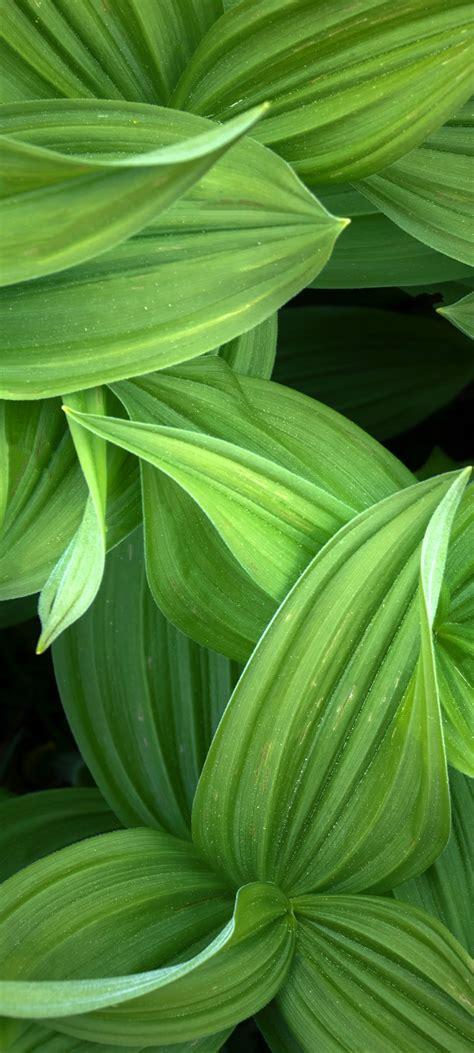 Green leaves 4K Wallpaper, Closeup, Plant, 5K, Nature, #2939
