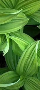 green, leaves, 4k, wallpaper, , closeup, , plant, , 5k, , nature, , , 2939