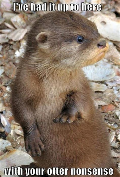 Funny Otter Meme - funny one liners otters dump a day
