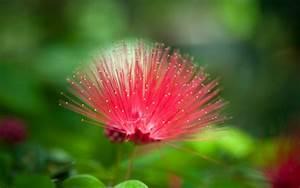 Most Beautiful Pink Flower HD Wallpaper