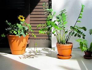 Pflanzen Im Urlaub Bewässern : k belpflanzen berwintern welche gew chse berleben drau en wohnen ~ Markanthonyermac.com Haus und Dekorationen