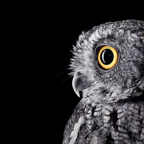 Owl Wallpapers by I Formatted The Surface Studio Owl Wallpaper For Your