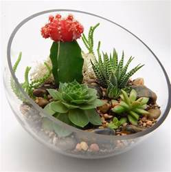 easy kitchen decorating ideas how to create and care for your stunning succulent