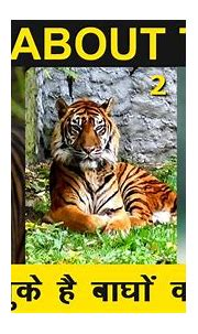 AMAZING FACTS ABOUT TIGERS - YouTube