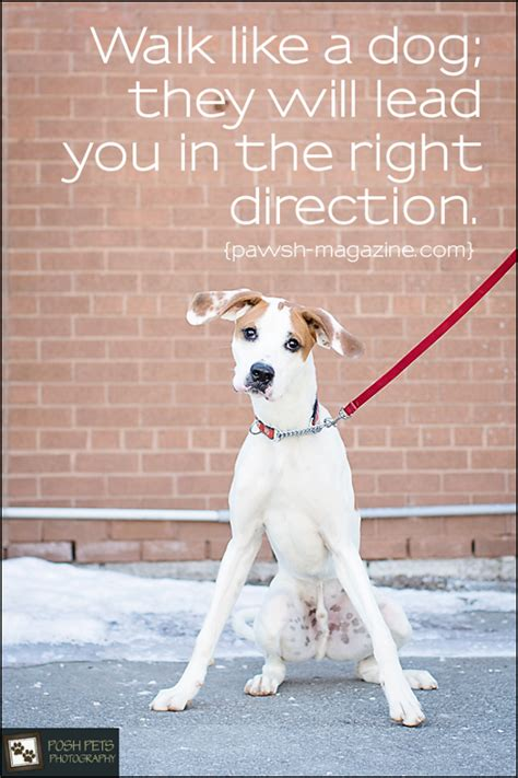 dog inspiration dogs walk quote quotes walking would say pawsh magazine lead they quotesgram sayings perro amazing camellia definitely does