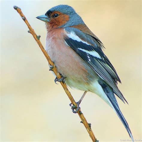 ce que mangent les oiseaux du jardin d 233 tente jardin