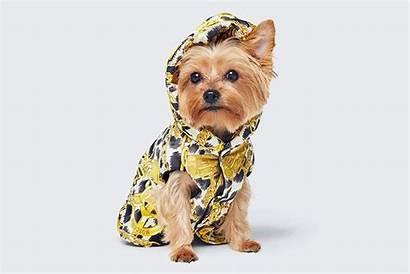 Moschino Pet Pets Designer Dog Hm Clothing