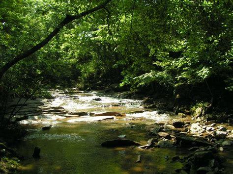 asheville botanical gardens botanical gardens at asheville lo que se debe saber